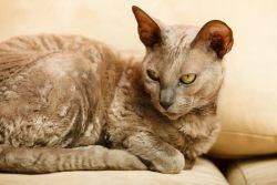 Кошачьи суеверия и немного истории