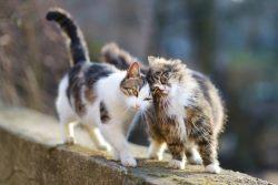Кошки в марте