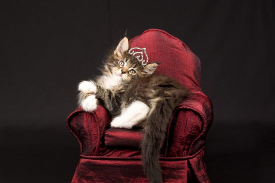 Сколько пород кошек существует в мире?