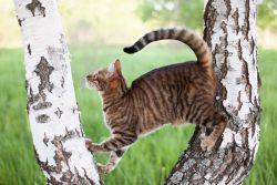 Пятнистые и полосатые кошки