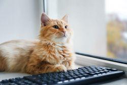 Кошачья блогосфера — добавляйтесь!