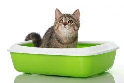 Как отучить кота метить территорию?