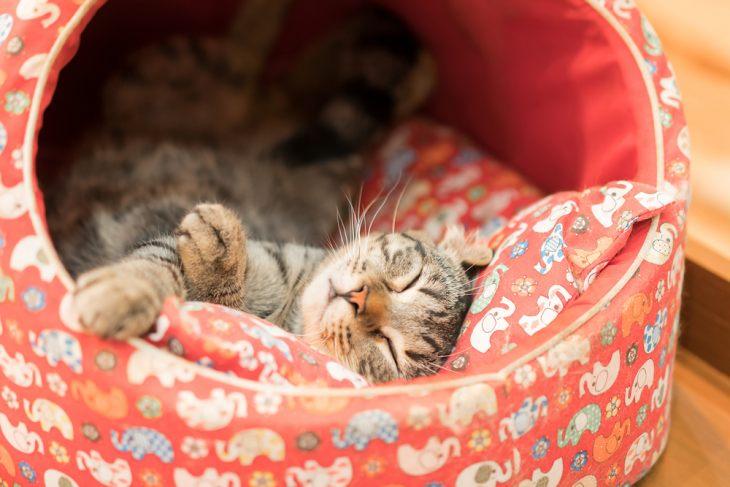 Сколько часов в сутки спит кошка и от чего зависит продолжительность сна
