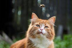 Кошку укусила оса/пчела — что делать?