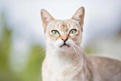Удивительные и необычные кошки