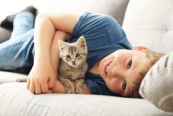 Как правильно выбрать котенка — 7 советов