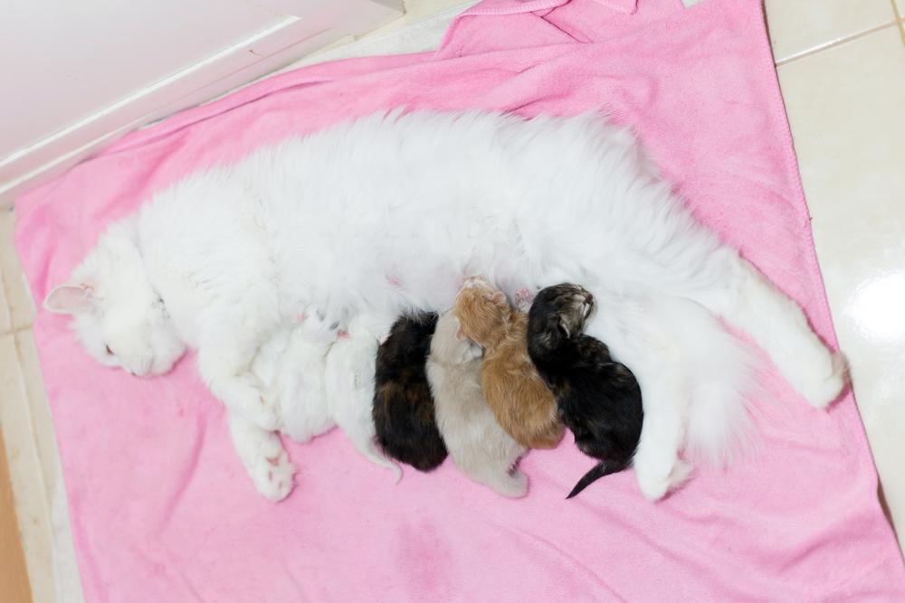 Как помочь кошке при родах