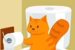 У кошки запор, что делать?