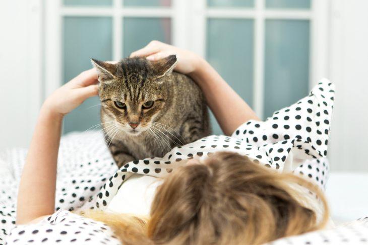 Кошка не любит вас? Давайте разберемся, почему она так себя ведет