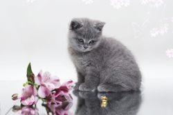 Cамая красивая кошка в мире
