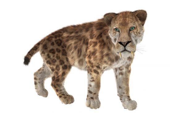 Криптозоология: Мексиканская гривастая кошка