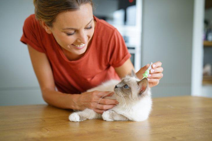 Саркоптоз и нотоэдроз у кошек: причины, лечение, профилактика