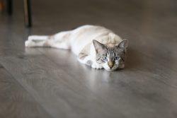 Глисты у кошек: лечение