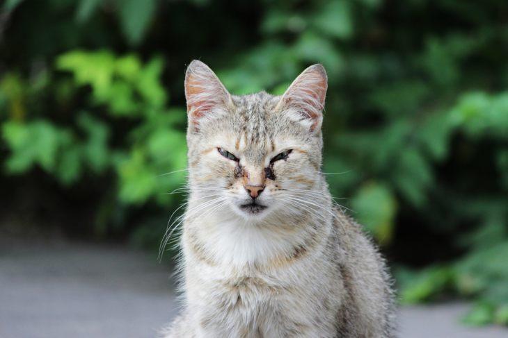 Как давать Ацикловир коту