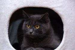 Почему кошки прячутся в домиках