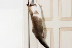 Ловкость кошек