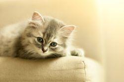 Котенок первый день дома — советы и рекомендации