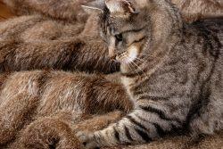 Кошек на шкуры! Или из чего сделаны наши шубки