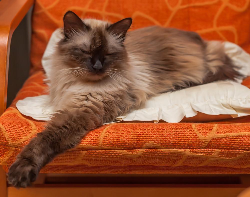 Божественные кошки в Древнем Египте — Кот Обормот