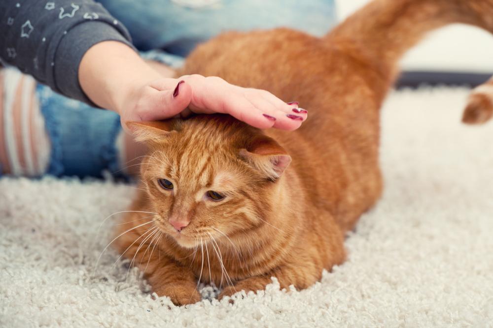 Вирус попадающий человеку от кошек