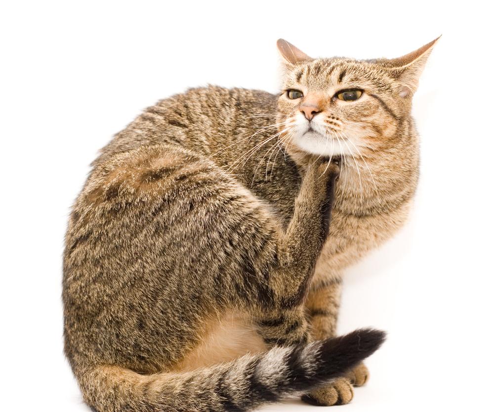 Какой у кошки должен быть нос — Кот Обормот