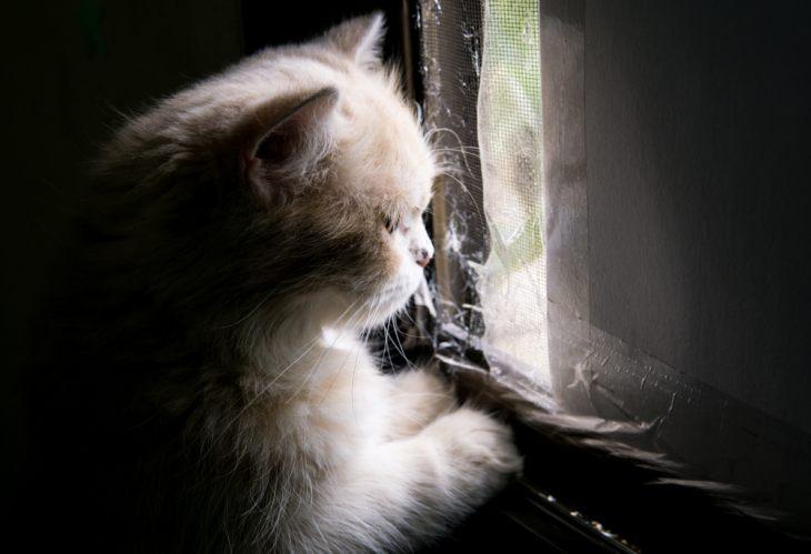 У кота депрессия — Центр чудес