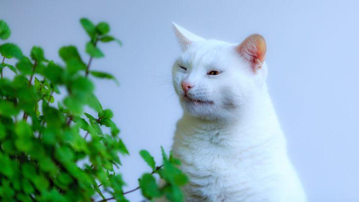 Атопический дерматит кошек