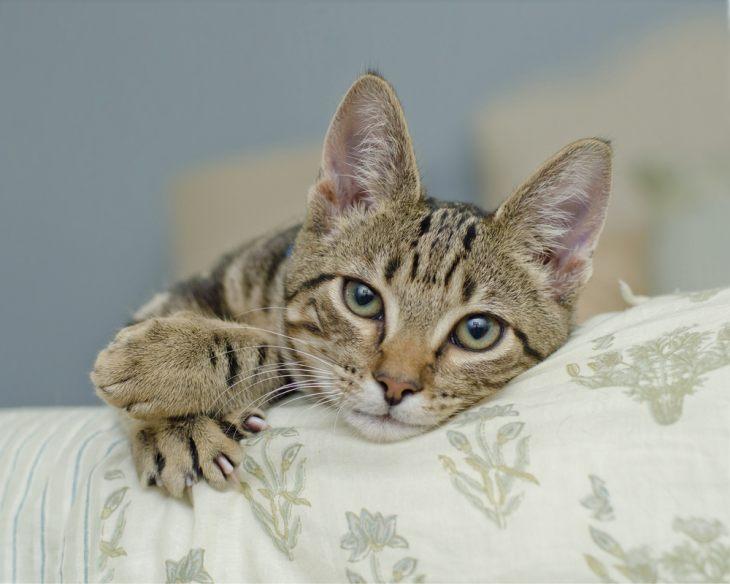Как кошку отучить драть мебель
