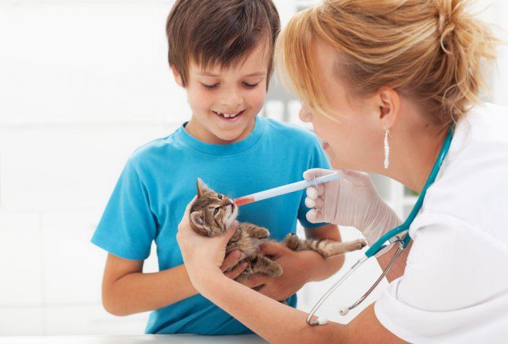 Признаки грамотного специалиста - на что обратить внимание при выборе ветеринара