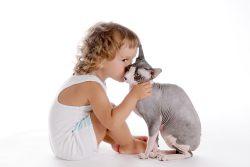 Как ухаживать за сфинксами котятами и взрослыми кошками?