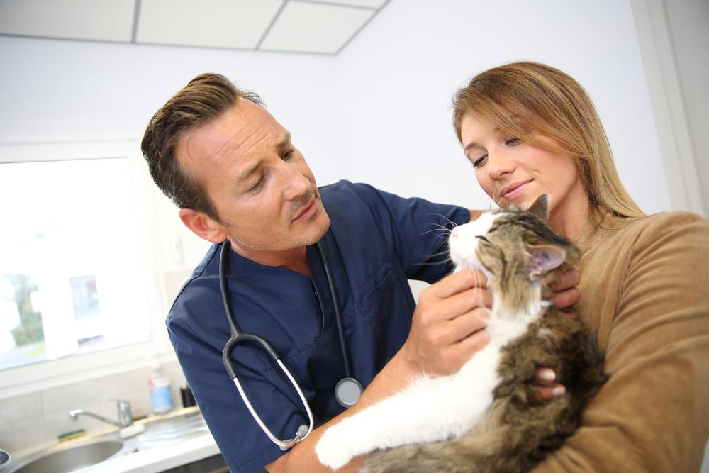 О чем говорит у кошки болячка на губе У кошки болячка на губе симптомы и лечение