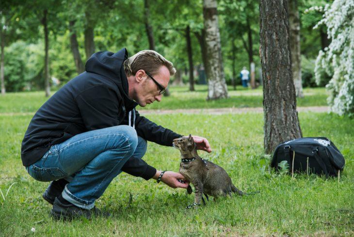 Как научить кошку командам и трюкам – читайте наши советы как научить кошку сидеть