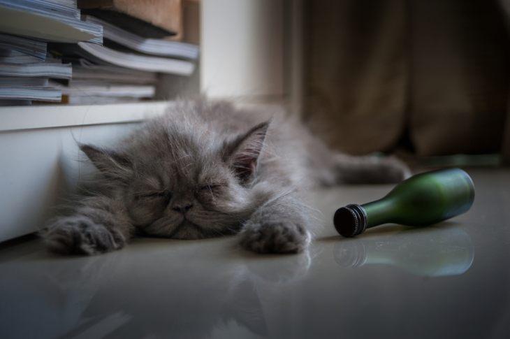 Водка, чай и сахарная пудра: как нельзя лечить кошек. Осторожно, в статье сплошное мракобесие!