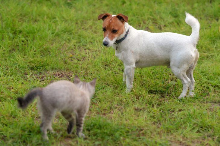 Кошка и собака: особенности совместного содержания