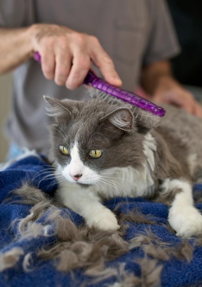 Как подстричь кошку в домашних условиях