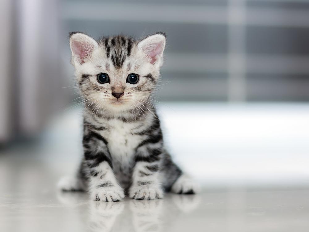 Развитие котят по неделям и месяцам