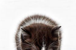 Кошка не пьет воду: что делать?