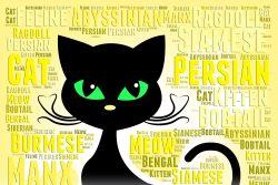 Как котенка приучить к имени?