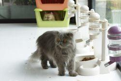 Автоматические поилки для кошек: обзор, рекомендации по выбору
