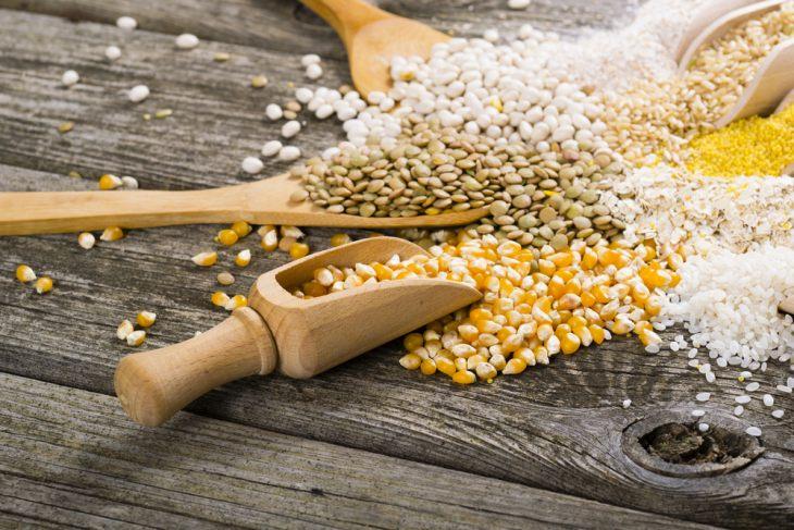 Обзор сухого корма Gina Elite Super Premium Nutrition
