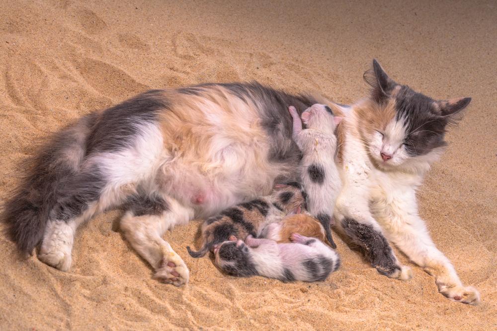 Отношение кошек к беременным 48