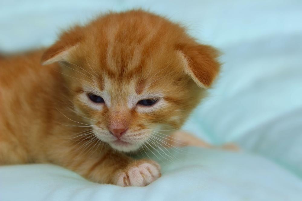 Когда у котят открываются глаза и каким должен быть уход