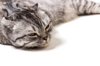 Котенок сустав опухоль нестабильность плечевого сустава упражнения