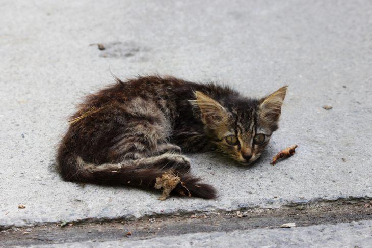 Вс что нужно знать об авитаминозе у кошек причины проявления и список продуктов по группам витаминов