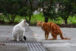 Признаки течки у кошек