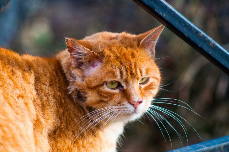 Облысение у кошки: причины и лечение — Кот Обормот