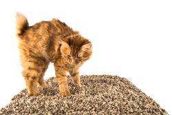 Как выбрать наполнитель для кошачьего туалета: советы и обзор средств
