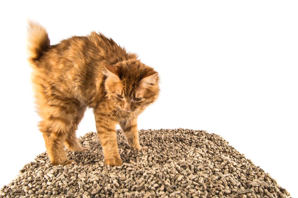 Как выбрать наполнитель коту