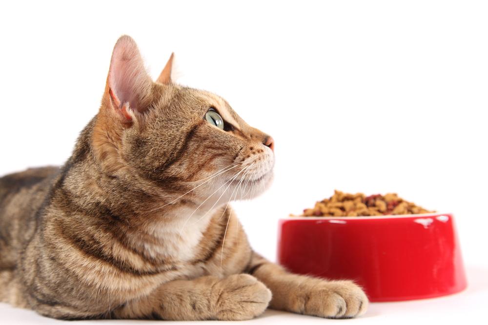 Как выбрать хороший корм для кошки?