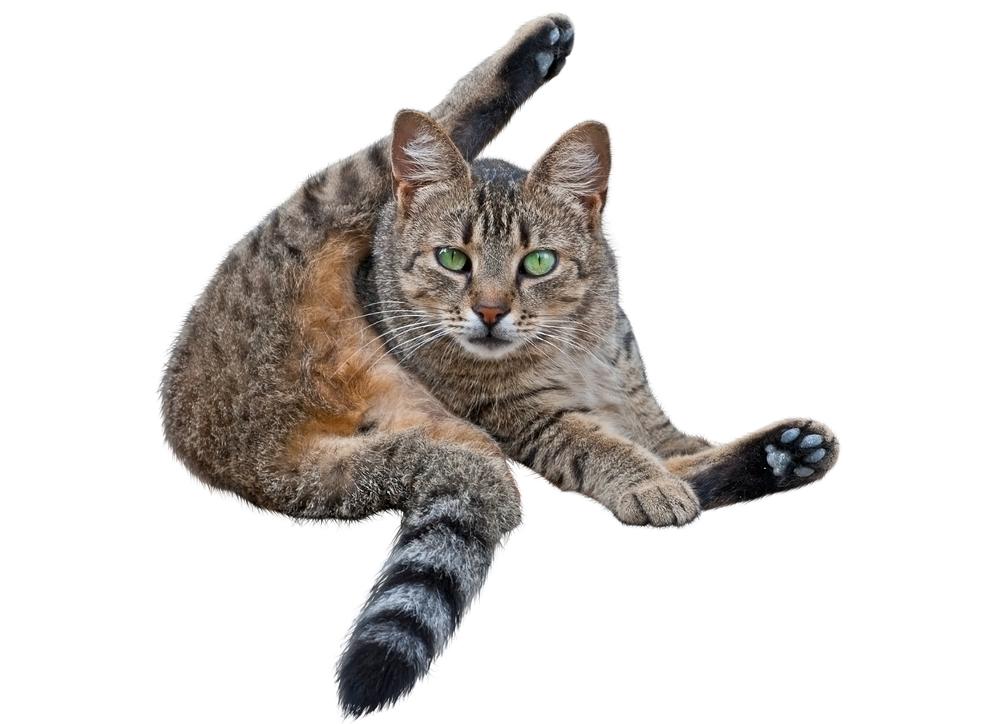 Какие у кошки бывают выделения из заднего прохода